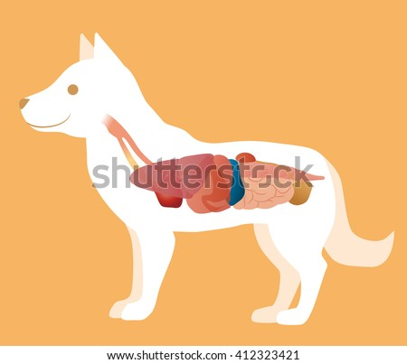 A Diagram Of A Dogs Organs - DIY Enthusiasts Wiring Diagrams •