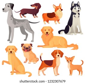 Dogs pets character. Labrador dog, golden retriever and husky. Sitting pug, chihuahua and dachshund. Cartoon domestic dogs pedigree vector isolated illustration icons set