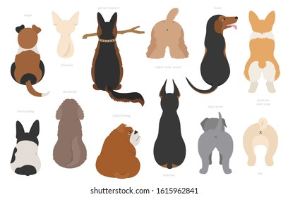 Dogs poses behind. Dog`s butts. Flat design clipart. Vector illustration