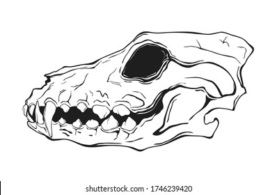 Dog's scull isolated on white. Vector illustration.