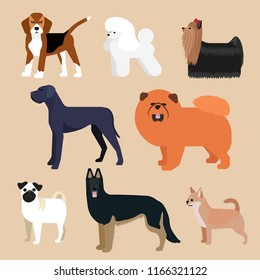 Dogs set. Collection of vector illustrations in flat style: beagle, poodle, Yorkshire Terrier, dog, chow chow, pug, sheepdog, chihuahua.