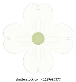 Dogwood blossom vector illustration.  Transparent background in vector file.