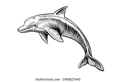 Dolphin drawing, vector sketch. Hand drawn jumping dolphin, black and white isolated illustration.