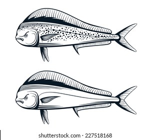 dolphin fish outline engraving vector illustration set