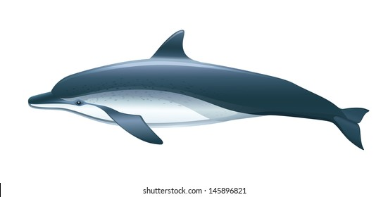 "Dolphin Vector Isolated ""Full compatible. Created with gradients."""