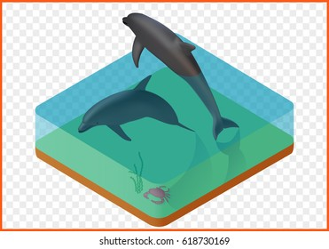 dolphins in water with crab isometric isolated vector eps Illustration