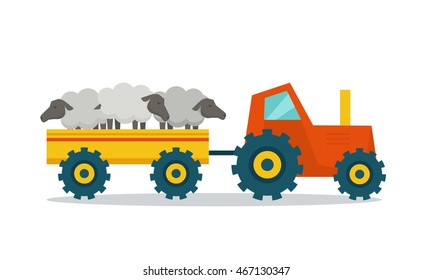 Domestic animals transportation vector. Flat design. Tractor with trailer caring sheep. Cattle mowing on farm illustration. Farming concept for meat, agricultural, transport companies. On white.