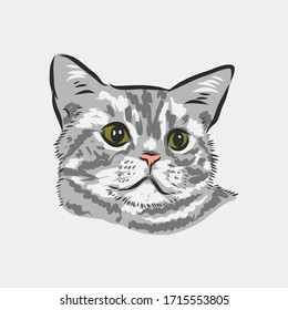 Cat Face Sketch High Res Stock Images Shutterstock