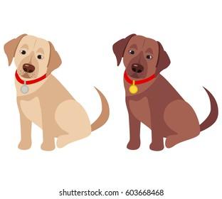 Domestic labrador retriever breed on the white background. Vector illustration