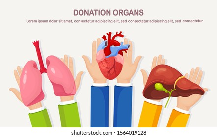 Donation organs. Doctors hands hold donor lungs, heart, liver for transplantation. Cardiac, respiratory, hepatic, digestive disease, cancer. Volunteer aid for the patient. Vector cartoon design
