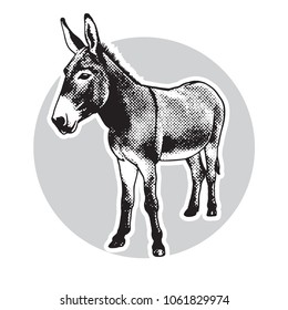 Donkey - black and white portrait in front view. Cute farm animal in engraving style. Vector illustration together with a large raster image.