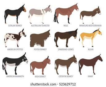 Donkey breed isolated icon set. Animal farming. Flat design. Vector illustration