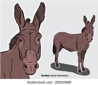 Donkey drawing beast of burden ass mule head shoulders