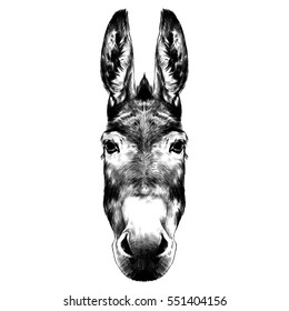 donkey head black and white sketch on a white background vector
