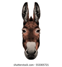 donkey head color  drawing vector