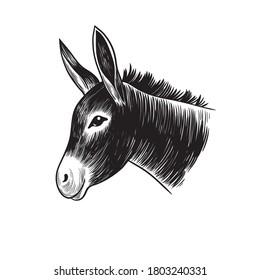 Donkey head. Hand drawn realistic animal portrait. Vintage vector illustration.
