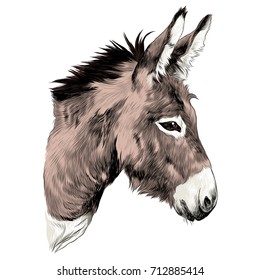 donkey sketch vector graphics color picture head
