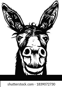 Donkey sketch vector graphics a monochrome graphic the head Peeking Donkey head. Hand drawn in a graphic style. Vintage vector engraving illustration for label, poster, logotype. Isolated on white