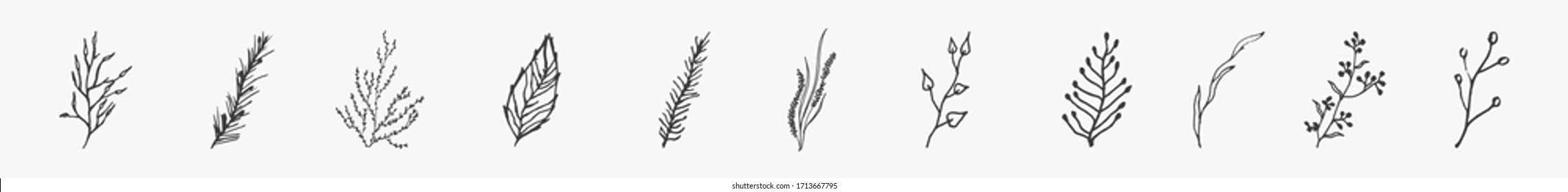 doodle branches for story on a white background