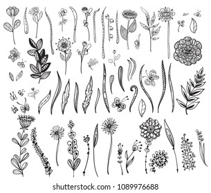 Doodle flowers and insect collection, hand drawn illustration