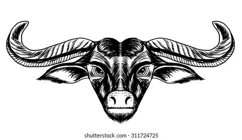 doodle line art a Buffalo head sketch design