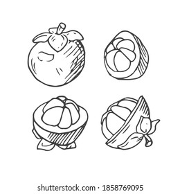 doodle mangosteen, mangosteen fruit, nutrition, Thailand fruits, mangosteen logo