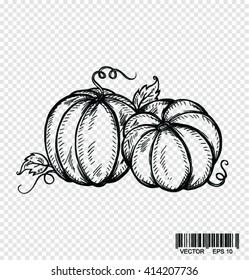 Doodle pumpkins. Hand drawn ink illustration