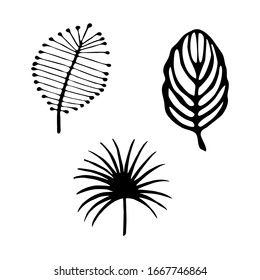 Doodle set drawing sprig with leaves, plant design element. A casual sketch by hand in black ink. Vector illustration isolated on white background.