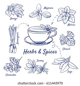 Doodle set of Herbs & Spices - Lovage, Marjoram, Melissa, Lemongrass, Chervil, Coriander, Savory, Sage, Tea cup, hand-drawn. Vector sketch illustration isolated over white background.