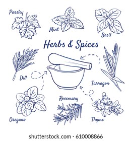 Doodle set of Herbs & Spices - Parsley, Mint, Basil, Dill, Oregano, Rosemary, Thyme, Tarragon, Mortar, hand-drawn. Vector sketch illustration isolated over white background.