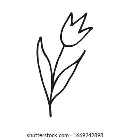 doodle sketch hand drawn cartoon tulip black outline on a white background. Vector illustration