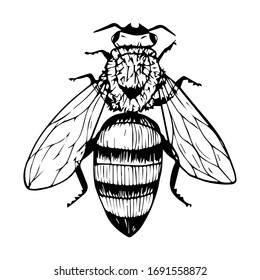 Doodle style bee. Black and white vector illustration. Insect is drawn by hand and isolated on a white background. Sketch of a honey bee. Top view. Outline drawing