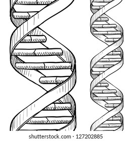 Doodle style DNA double helix seamless vector background or border.