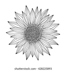 Doodle sunflower contour isolated on white background. Vector illustration