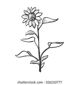 Doodle sunflower. Doodle style. Isolated in white background. Excellent vector illustration, EPS 10