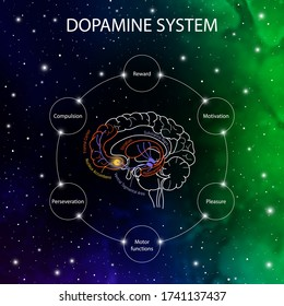 Dopamin bewegt sich im Gehirn. Dopamin funktioniert. Neurowissenschaftliche medizinische Informationen. Striatum, Substa nigra, Hippocampus, ventral tegmental Bereich und Nucleus accumbens.