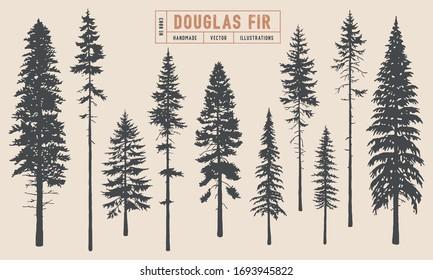 Douglas Fir tree silhouette vector illustration hand drawn