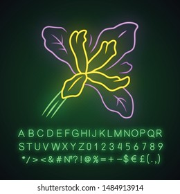Douglas iris plant neon light icon. California blooming wildflower. Garden flower, weed. Iris douglasiana. Spring blossom. Glowing sign with alphabet, numbers and symbols. Vector isolated illustration