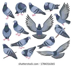 Dove bird isolated cartoon set icon. Pigeon vector cartoon set icon. Vector illustration dove bird on white background.