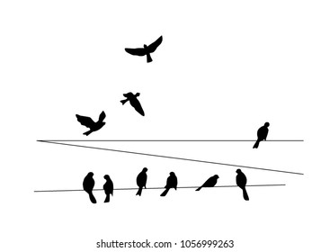 Dove. Common birds on the power line. Vector silhouette a flock of birds