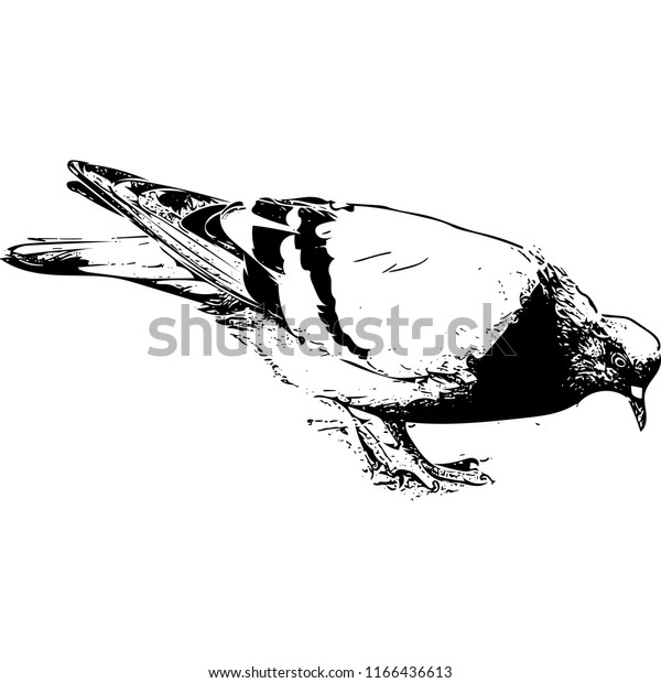 A dove is eating (vector), Russia
