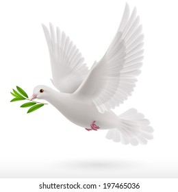 dove flying with a green twig in its beak