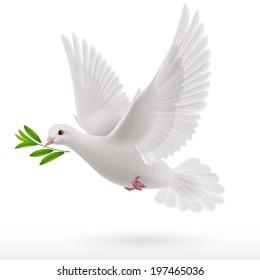 голубь летать с зеленой веточки в клюве