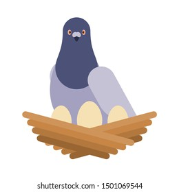 Dove and nest with eggs. pigeon vector illustration