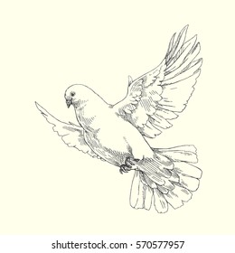 Dove. Vector hand drawn illustration of flying pigeon isolated on white