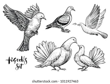 Doves hand drawn illustration. Vector line art with couple of pigeons, flying white bird, standing carrier pigeon and dove with branch.