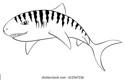 Drafting animal for tiger shark illustration