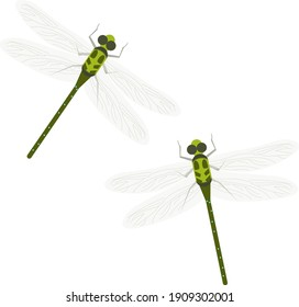 Dragon Fly, illustration, vector on a white background.