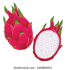 dragon fruit, whole fruit and half. tropical fruits. Vector illustration isolated on white background