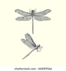 Dragonflies. hand drawn graphic illustration